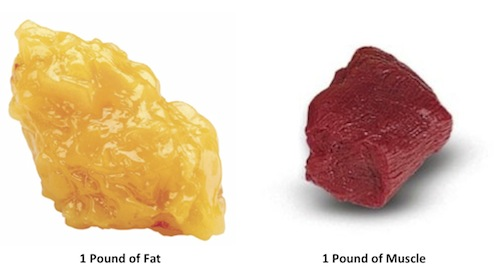 fat_and_muscle_weight